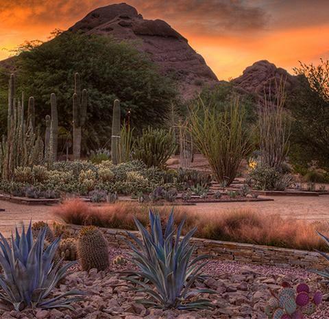 courtesy of desert botanical garden - Desert Botanical Garden